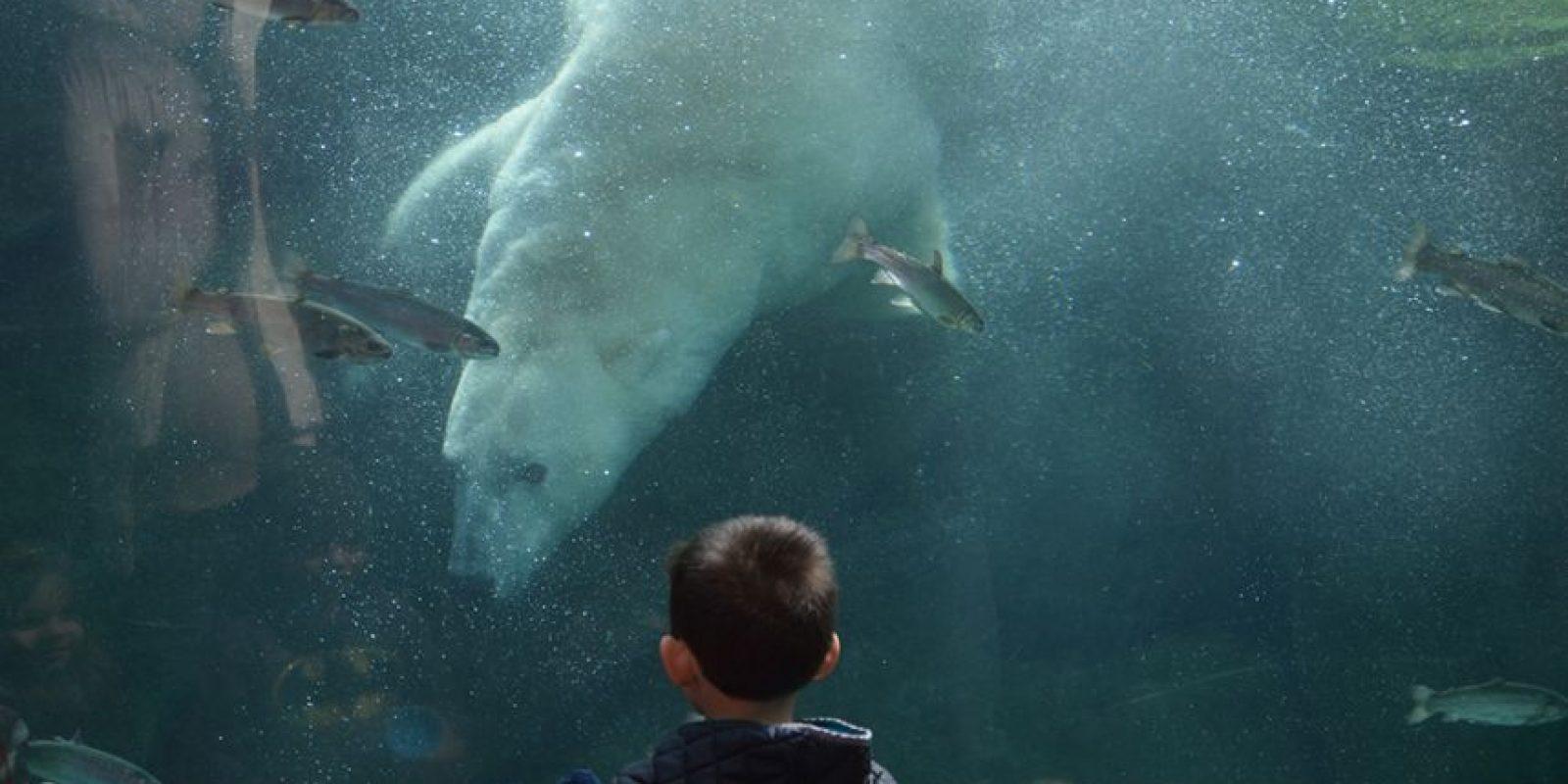 Momentos antes de que Alexander y Aurora se conocieran Foto:Steve Hikida/Solent