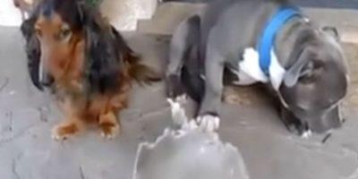Ellos son los perritos culpables. Foto:Facebook