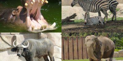 Zoológico de Aragón