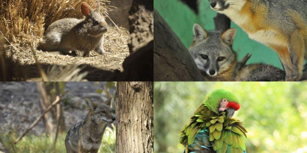 Los zoológicos que debes conocer en la CDMX