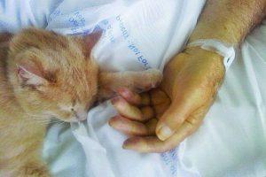 Tom, el gato que ayuda a veteranos de guerra Foto:Facebook.com/SalemVAMC/