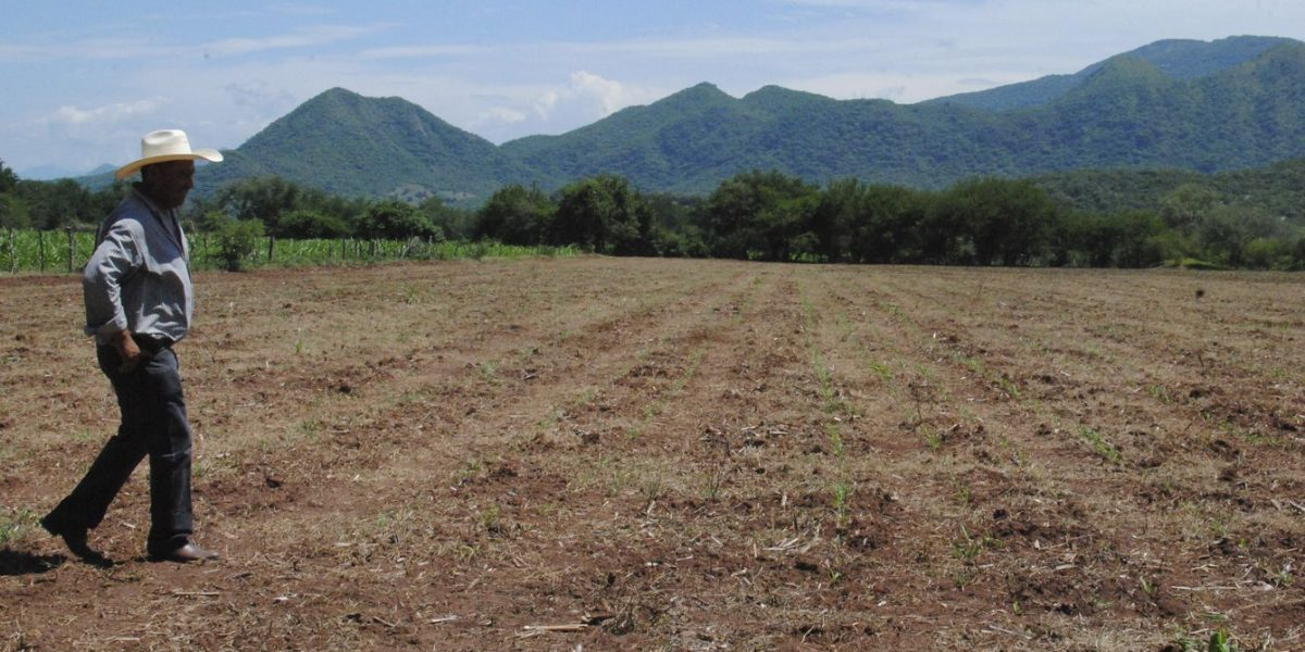 Más de 142 millones de hectáreas de suelos mexicanos están degradados