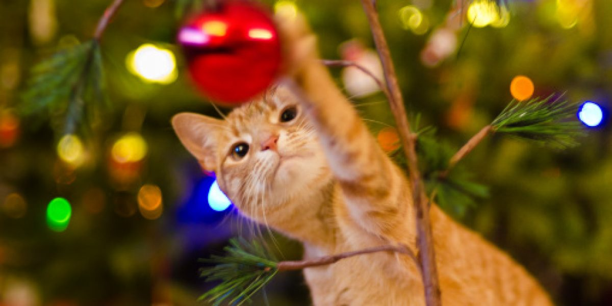 Asiste a Navicat, una colecta navideña felina
