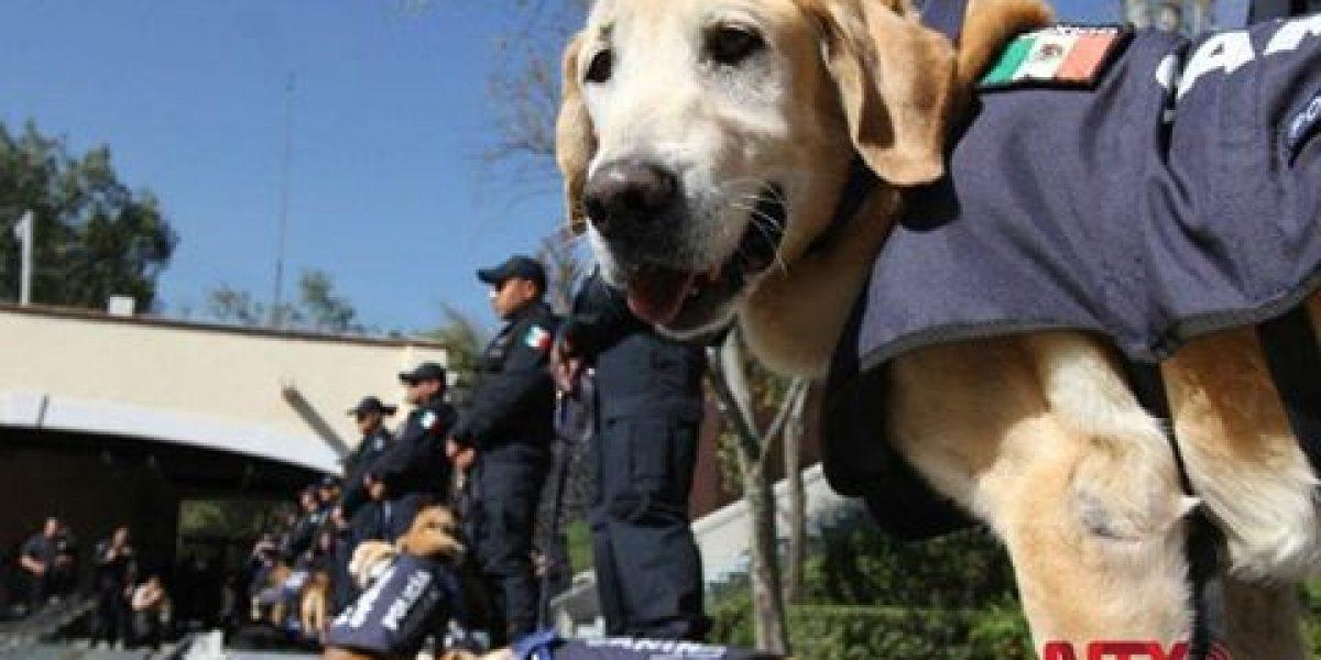 Los nueve perros jubilados de la  Policía Federal