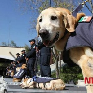 Caninos de la policía federal