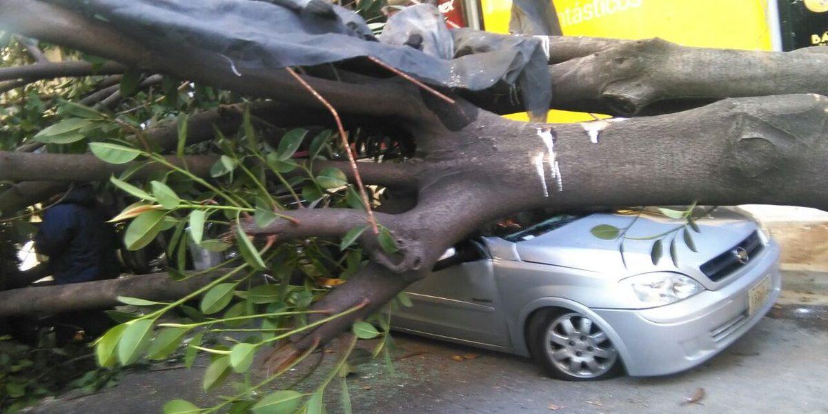 Reportan caída de un árbol sobre auto en Insurgentes