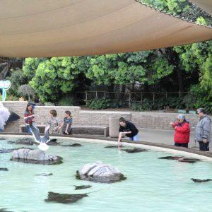 La interacción con los animales es uno de los grandes atractivos del parque. | Erika Padrón