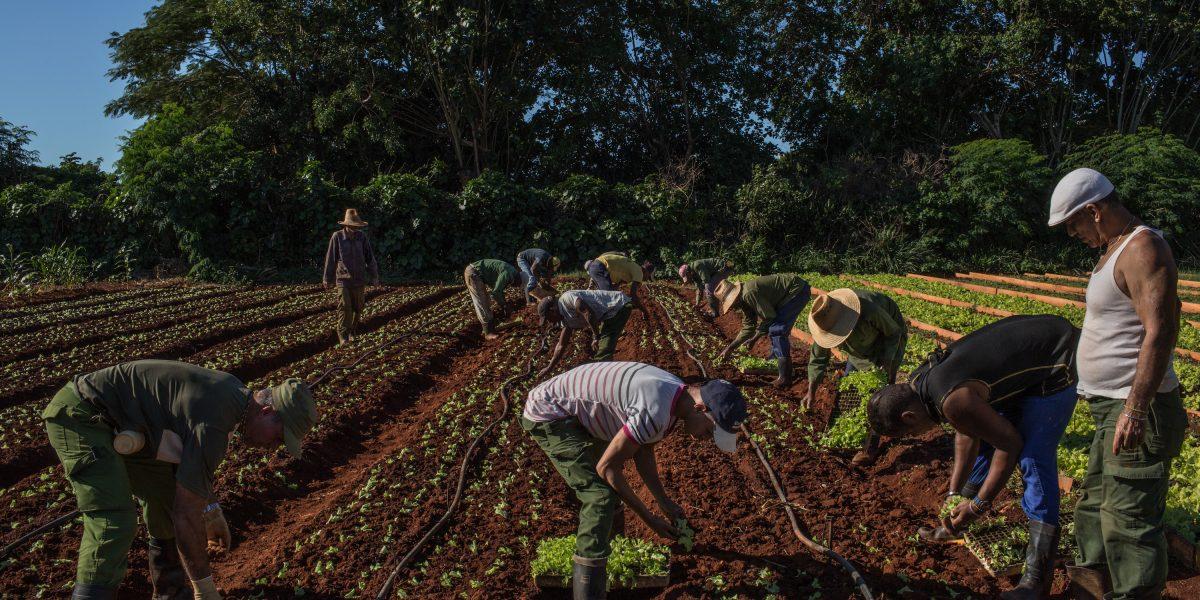 La explosión del turismo en Cuba mantiene a la comida alejada de los platos de los residentes
