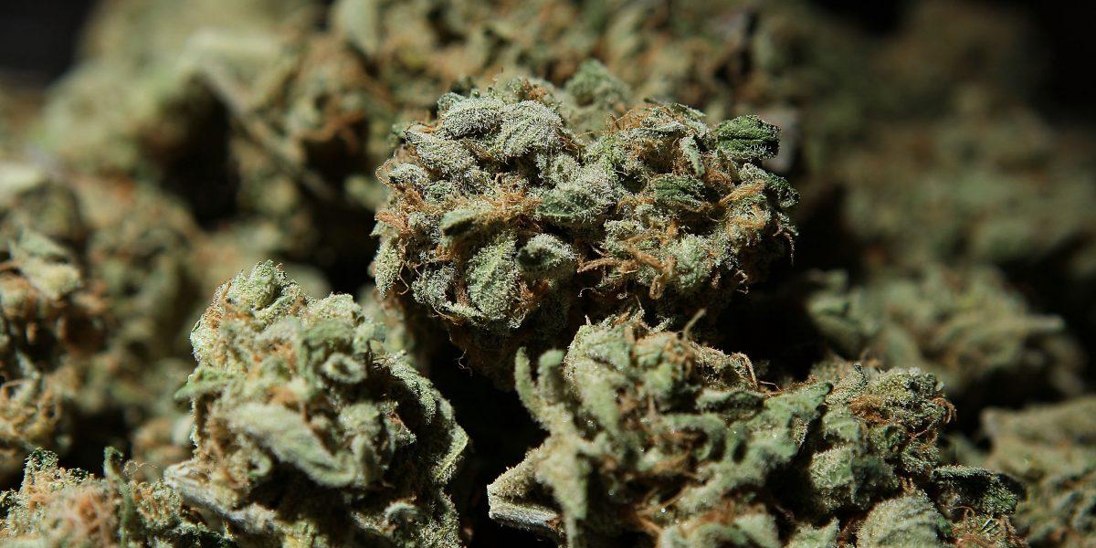 Aseguran más de media tonelada de marihuana en Sonora