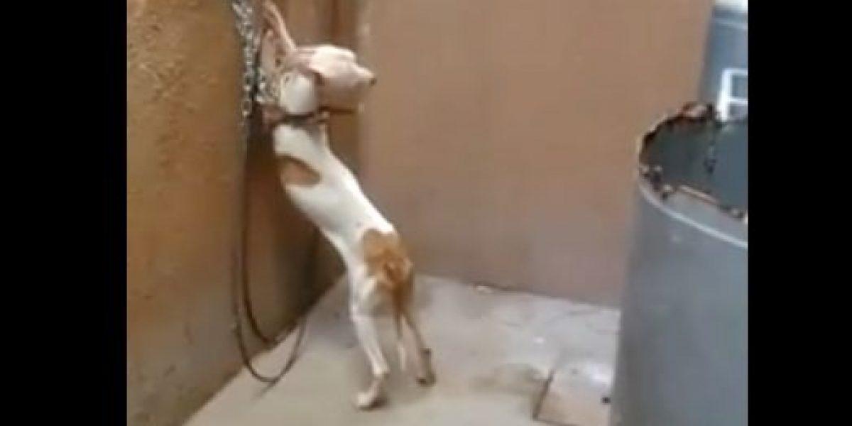 VIDEO: Torturan a perro en Edomex; Propaem lo asegura tras denuncia