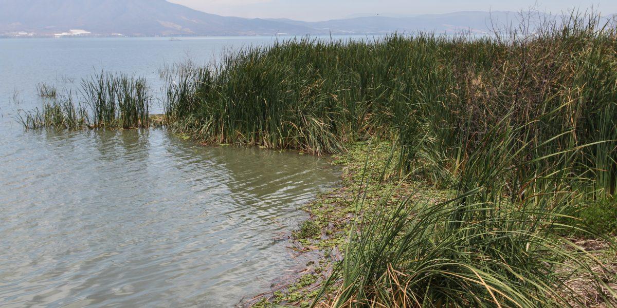 Jalisco busca mejorar disponibilidad del agua en calidad y cantidad