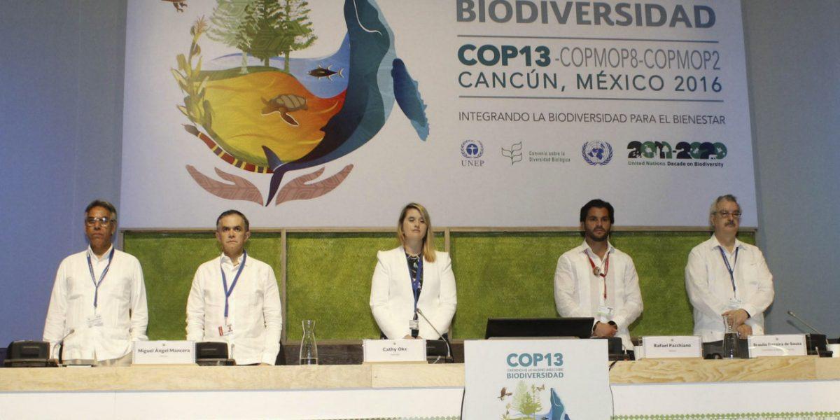 COP13 concluye con preservación de biodiversidad como eje principal