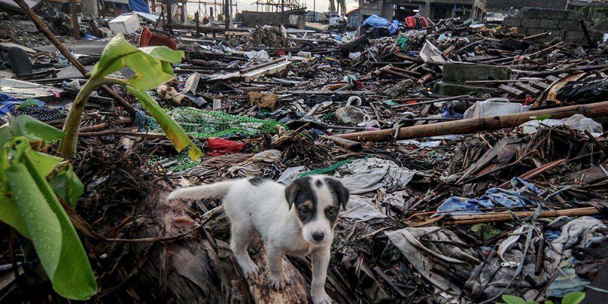 CDMX aumenta planes para proteger a mascotas en desastres