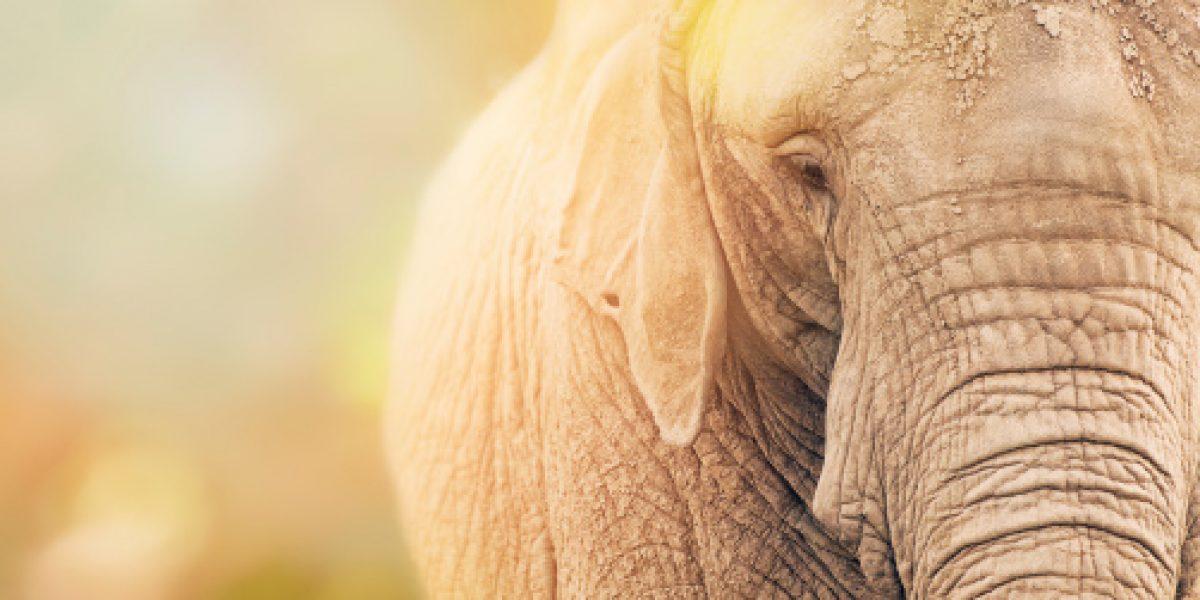 Investigan muerte de elefante en parque ecológico de Ecatepec