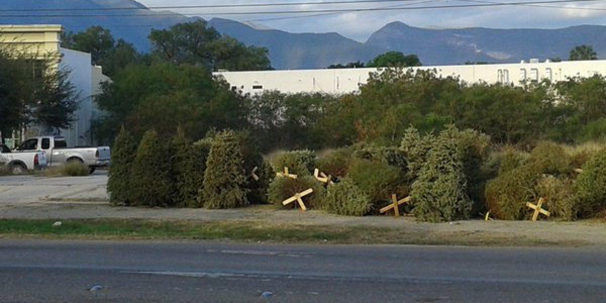 Disponen en Monterrey centros de acopio para pinos navideños