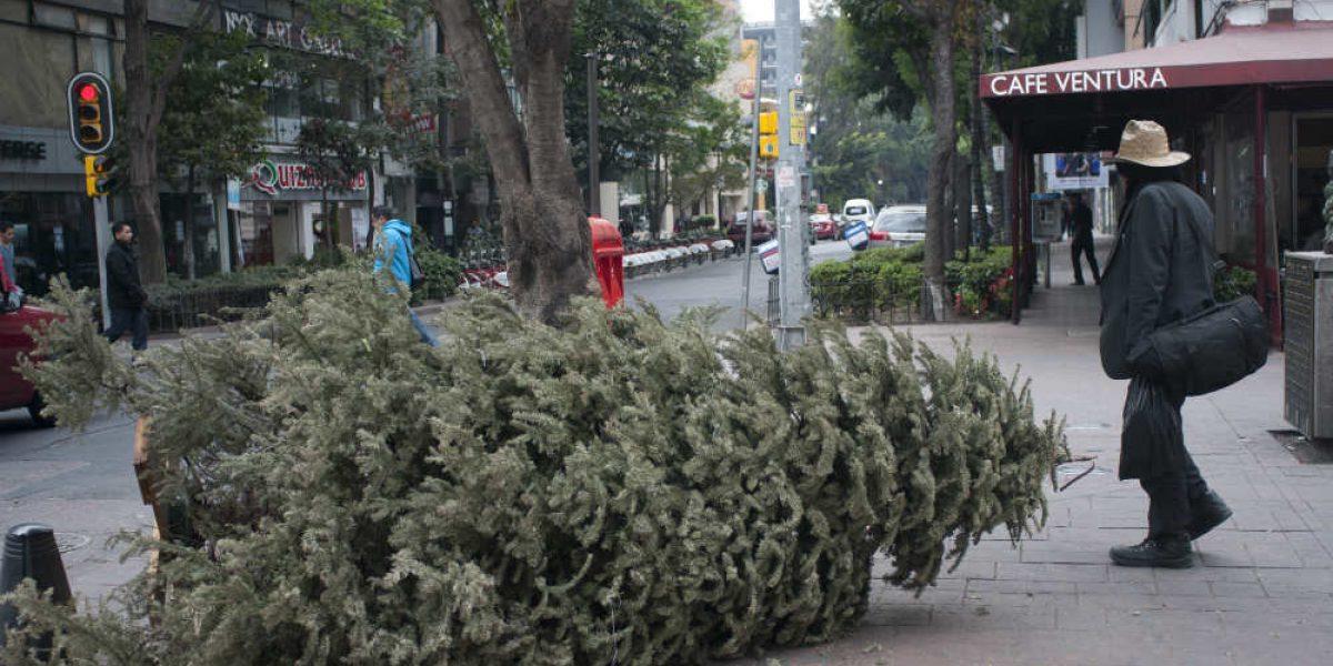 Zona Rosa, traspatio de Reforma
