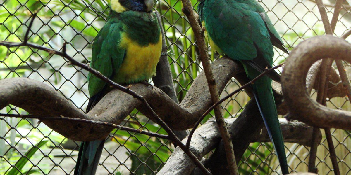 Cambio climático ha modificado las alas de algunas aves