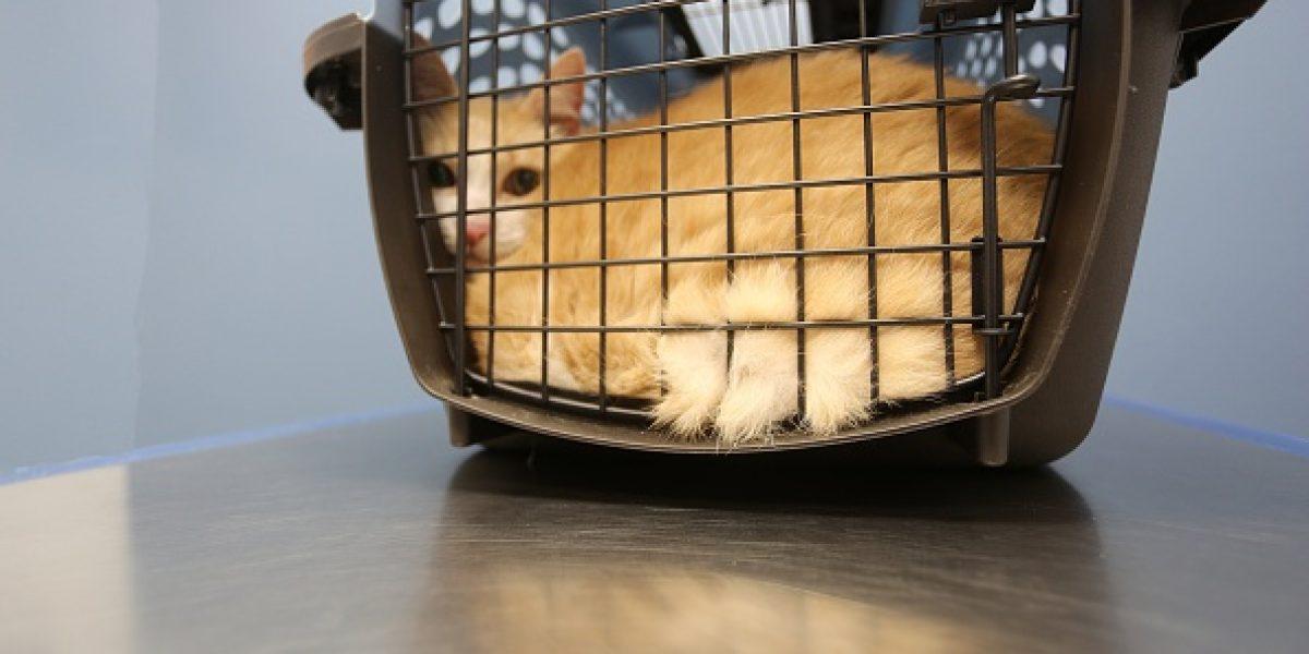 Desarrollan sistema para detectar pulso de mascotas