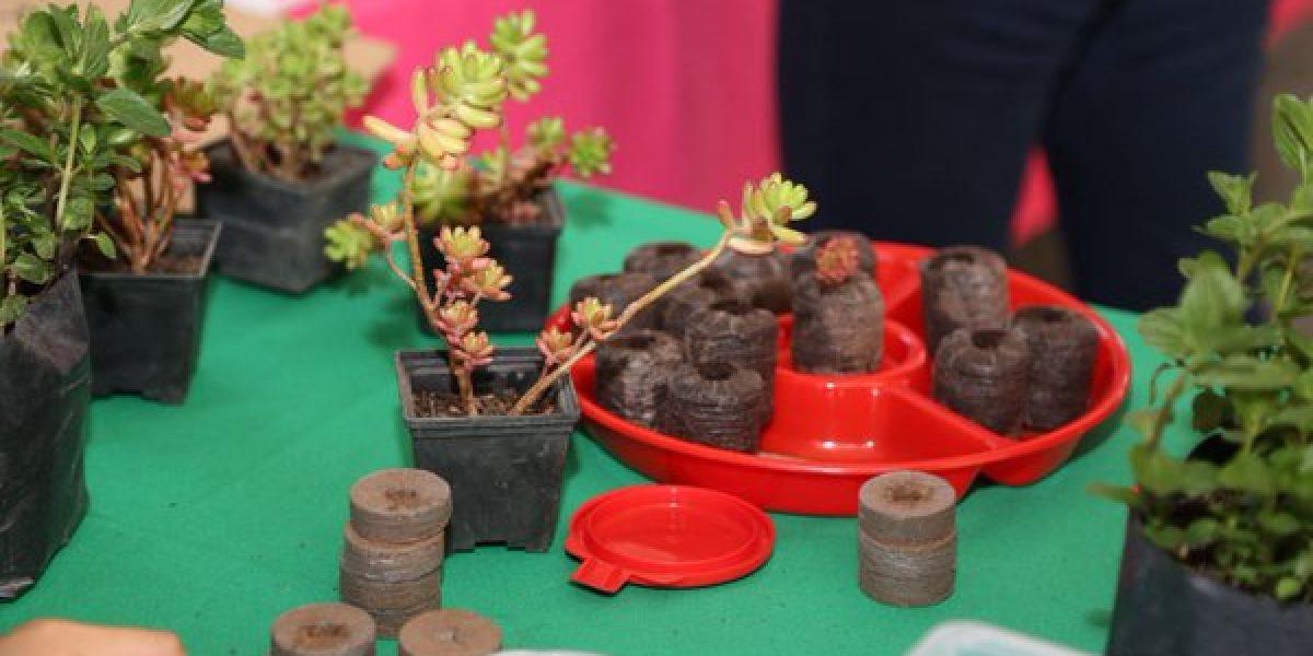 Gobierno capitalino promoverá uso de medicina tradicional