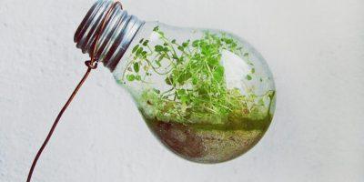 Mexicanos investigan energía limpia a través de descomposición del PET