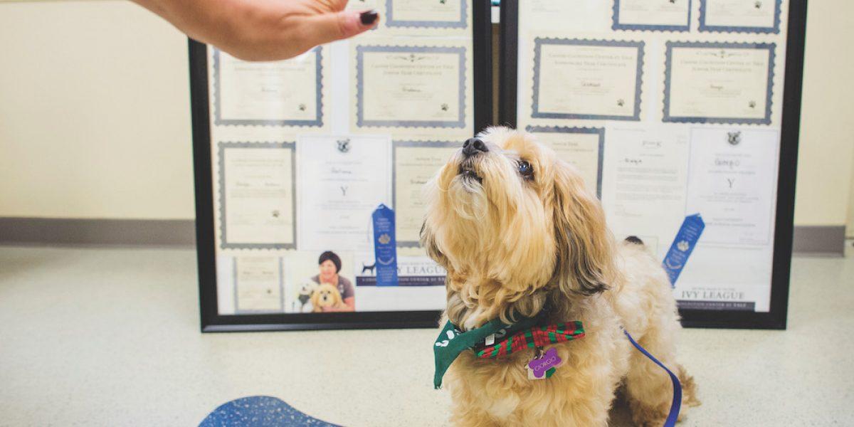 Para calificar la inteligencia de sus perros, los humanos aprenden nuevos trucos