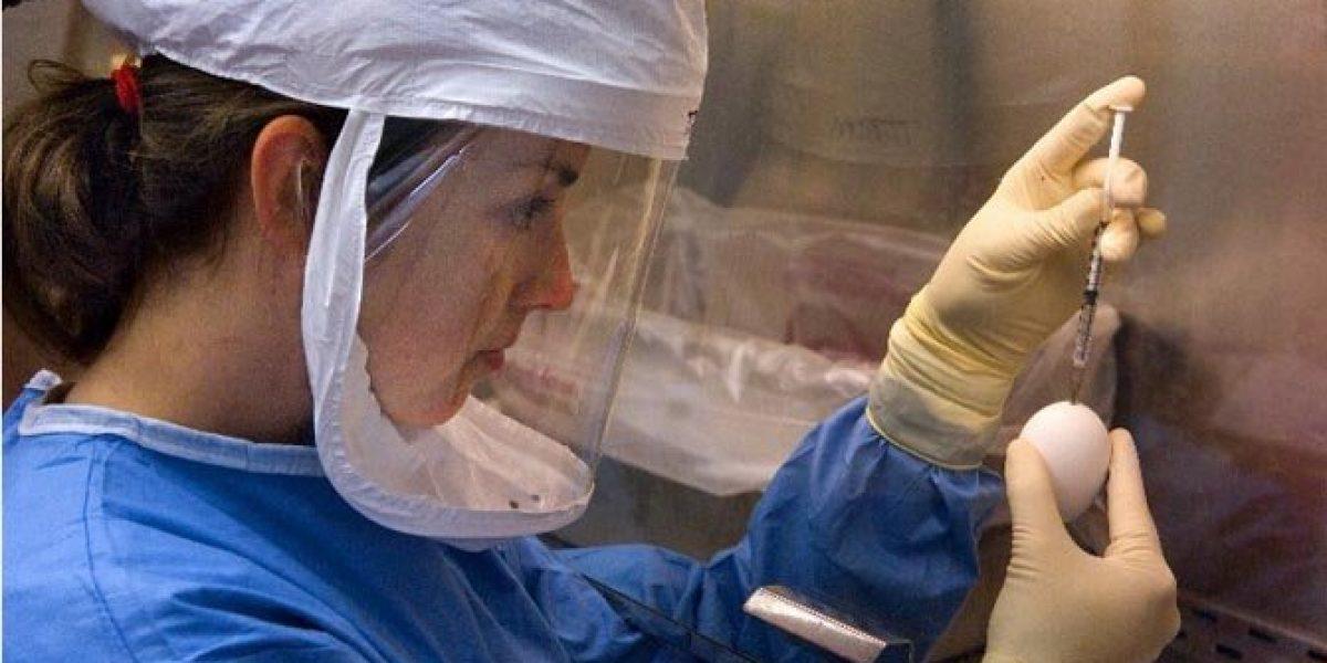 China reporta una persona muerta de gripe aviar