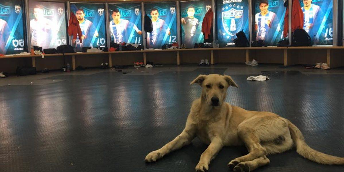 "Pachuca invitó a sus vestidores al perro que ""invadió"" la cancha"