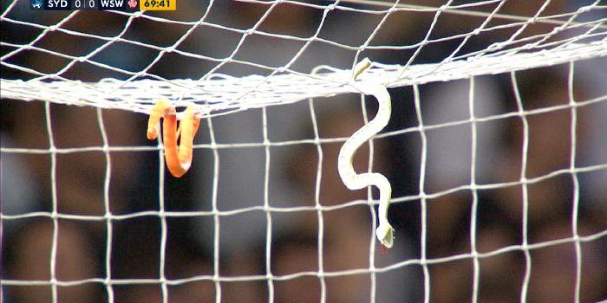 Aficionados de futbol lanzan serpientes a portería rival