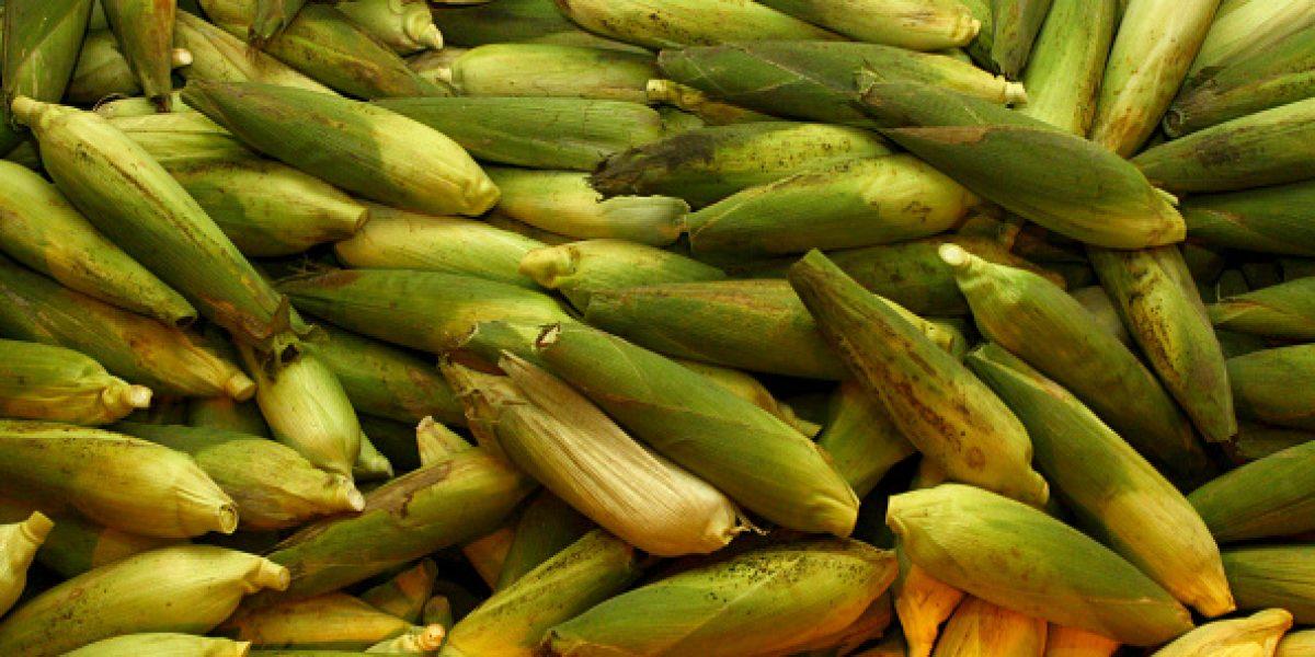 Productora de harina mexicana no subirá precios