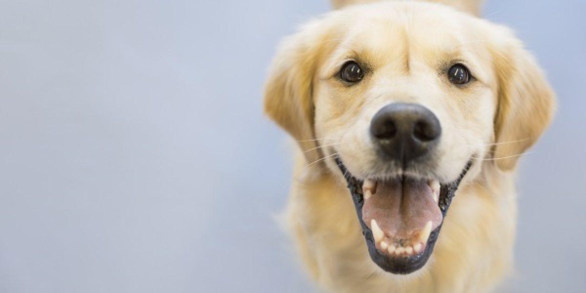 CDMX tendrá concierto de rock para perros este fin de semana