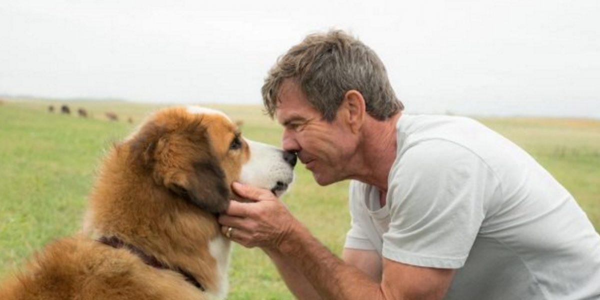 Denuncian maltrato animal durante filmación de la cinta La razón de estar contigo