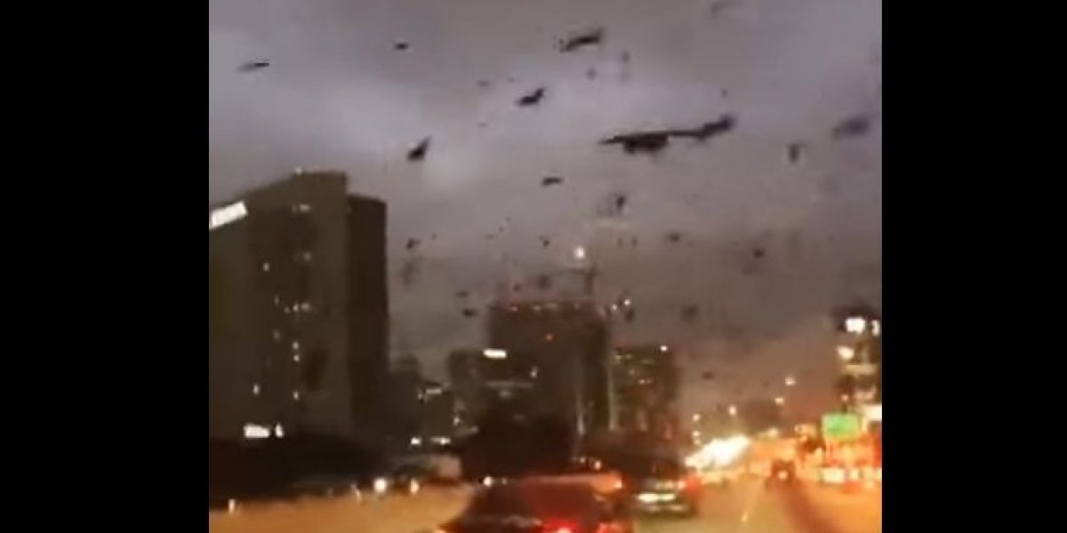 VIDEO: comportamiento extraño de aves desconcierta a habitantes de Houston