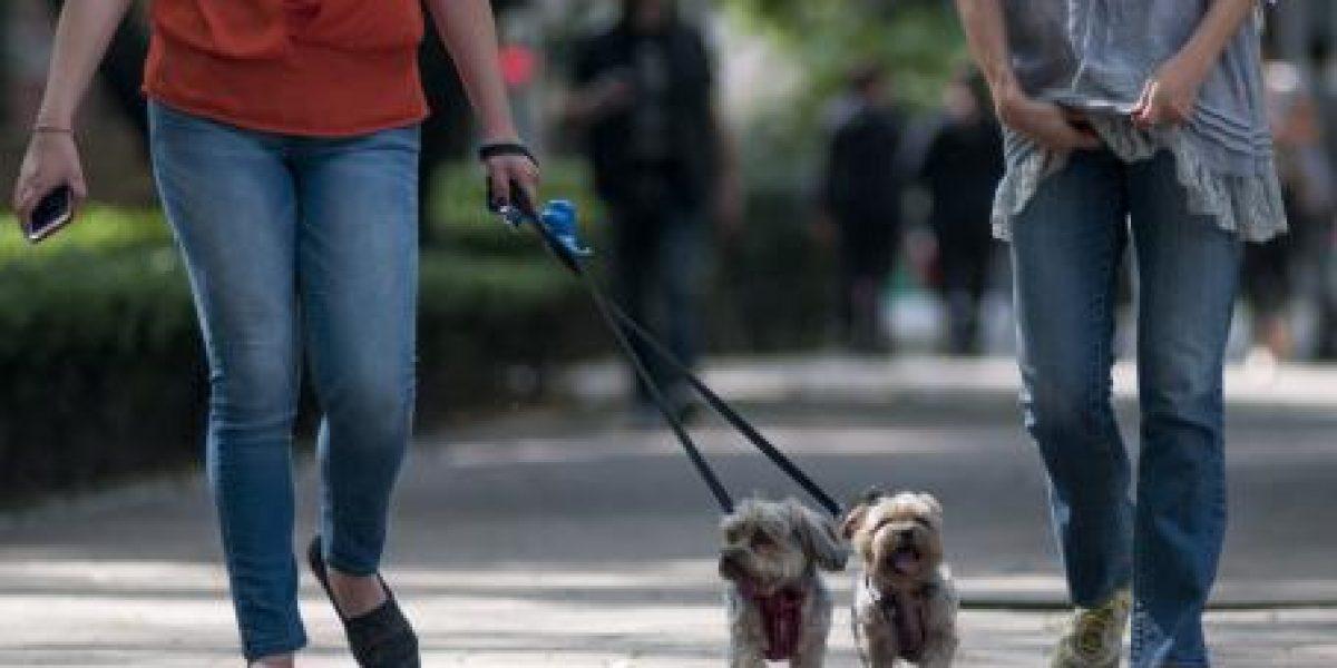 Polanco y Condesa, las colonias donde más roban mascotas