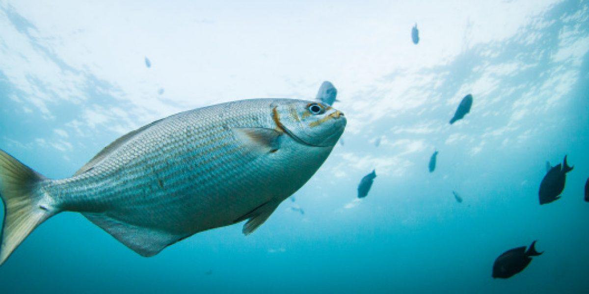 Altas temperaturas en el agua provocan cambio de genes en peces