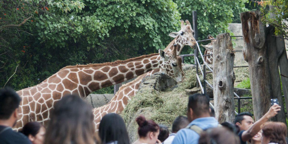 Profepa multa a Zoológico de Chapultepec con 255 mil pesos