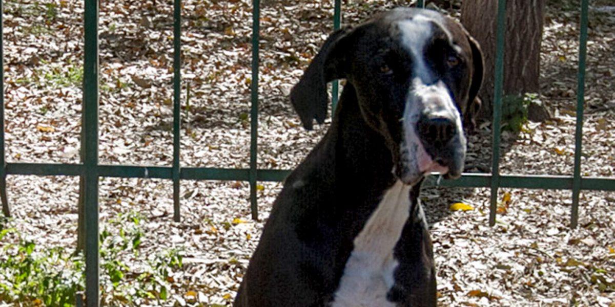 Jack, el perro matemático que promueve la adopción