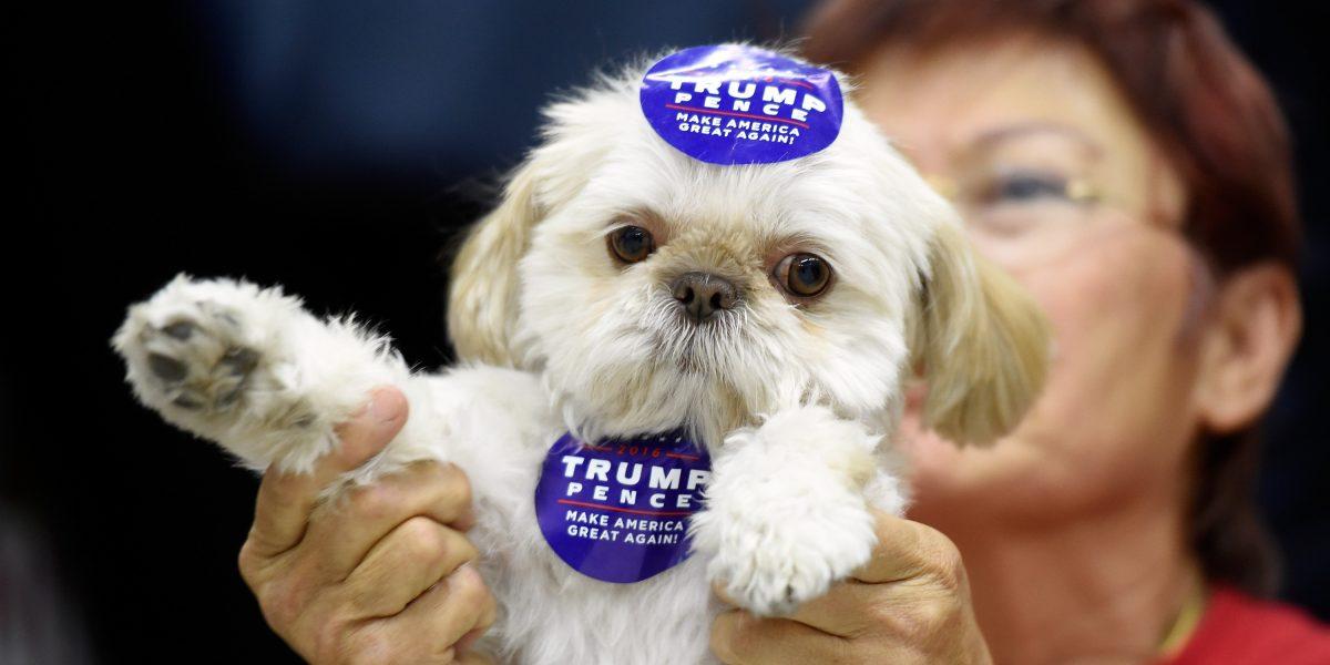Los tuits negativos de Donald Trump salvan a perritos y gatitos