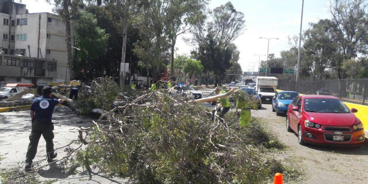 Viento tira 68 árboles en la CDMX