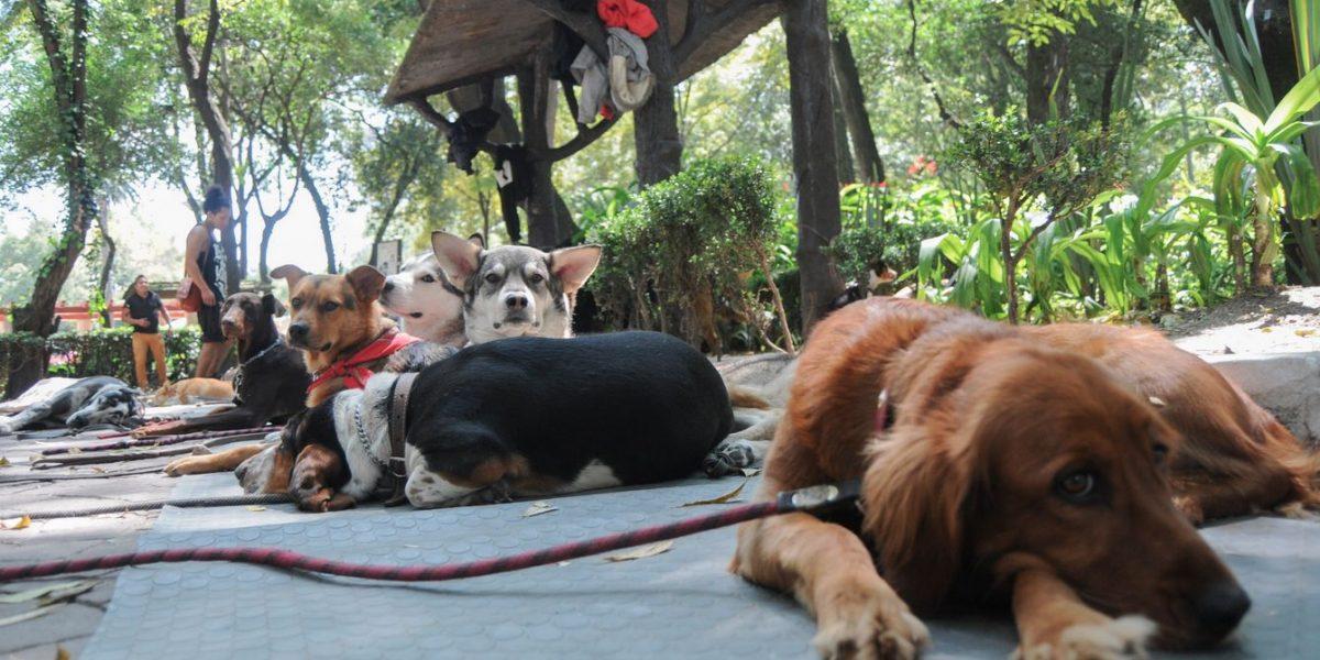 Parques para pasear con tu perro en la CDMX
