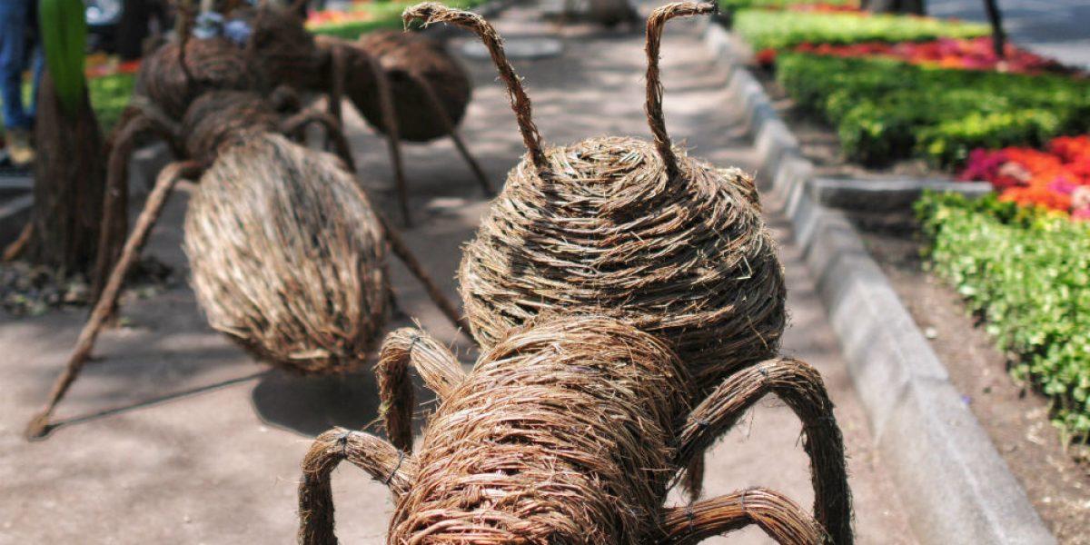 Hormigas gigantes invaden Reforma