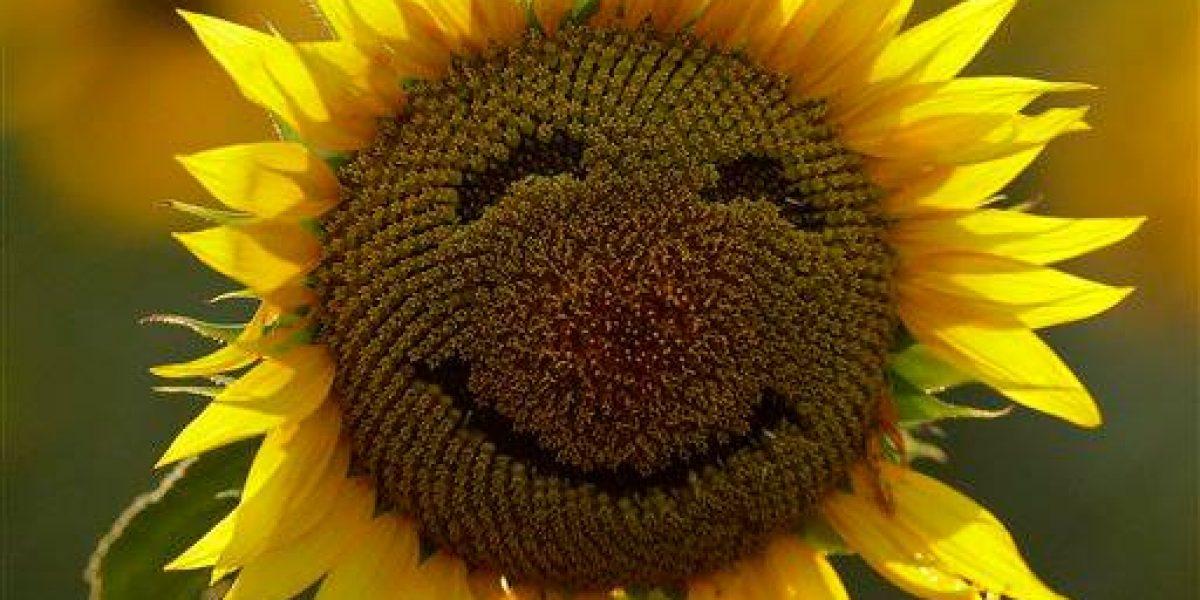 Día internacional de la felicidad, ¿cuál es el país más feliz del mundo?