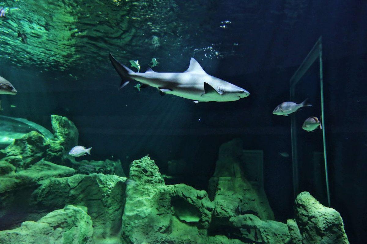 acuario5