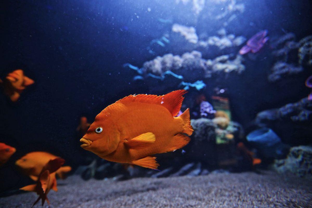acuario6