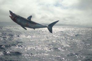 Revelan video donde libera a tiburones atrapados ilegalmente