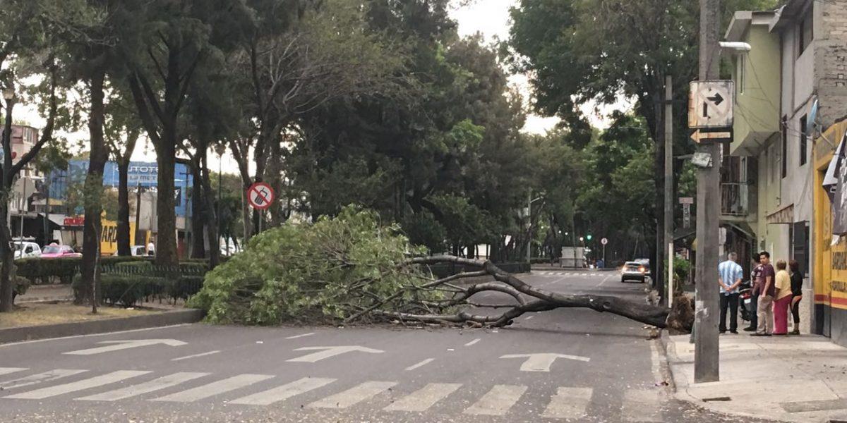 Viento derriba al menos 6 árboles en la CDMX