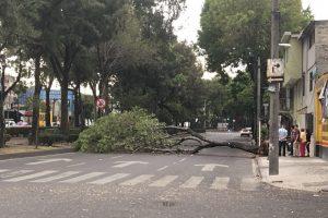 Viento derriba al menos 6 árboles
