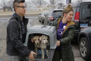Rescatan a 46 perros que iban a ser comida humana