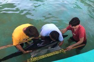 Autoridades liberan a delfín varado en Oaxaca
