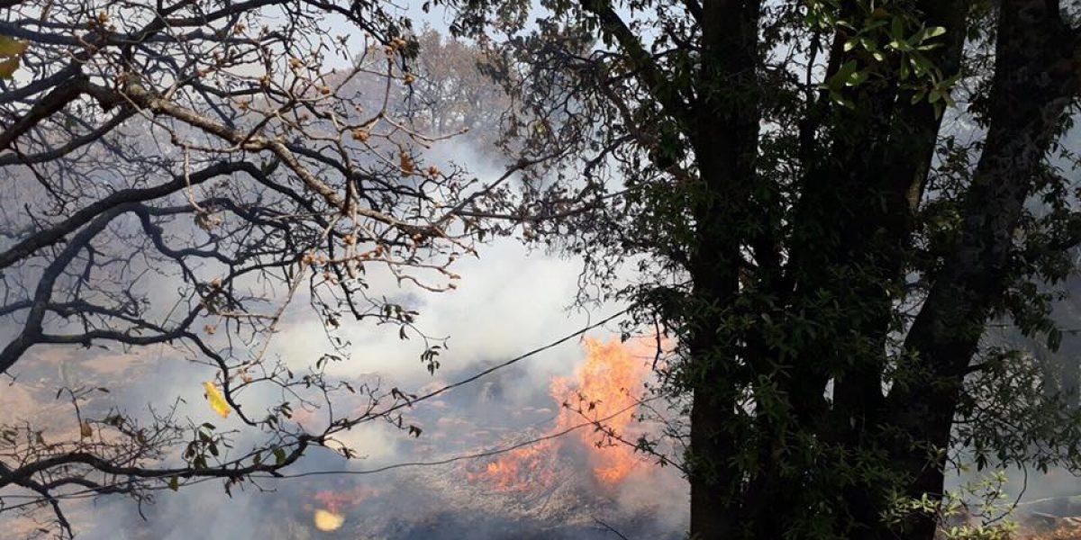 Se incendia albergue para perros en Xochimilco