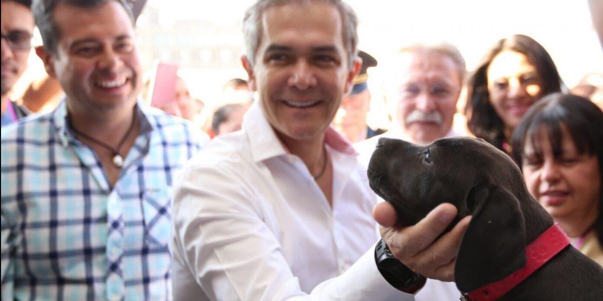 Gobierno capitalino promueve respeto a derechos de los animales